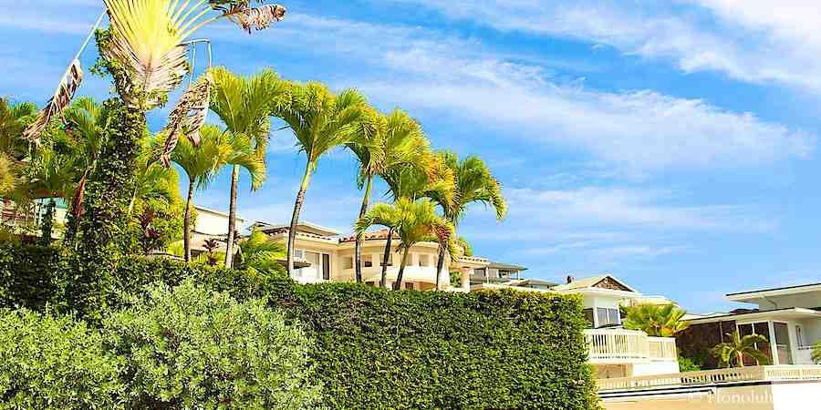 Houses in Diamond Head Hidden Among Lush Green