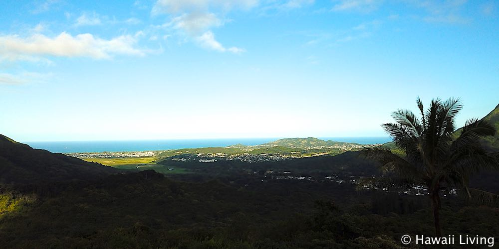 Pali Hwy Scenic Lookout