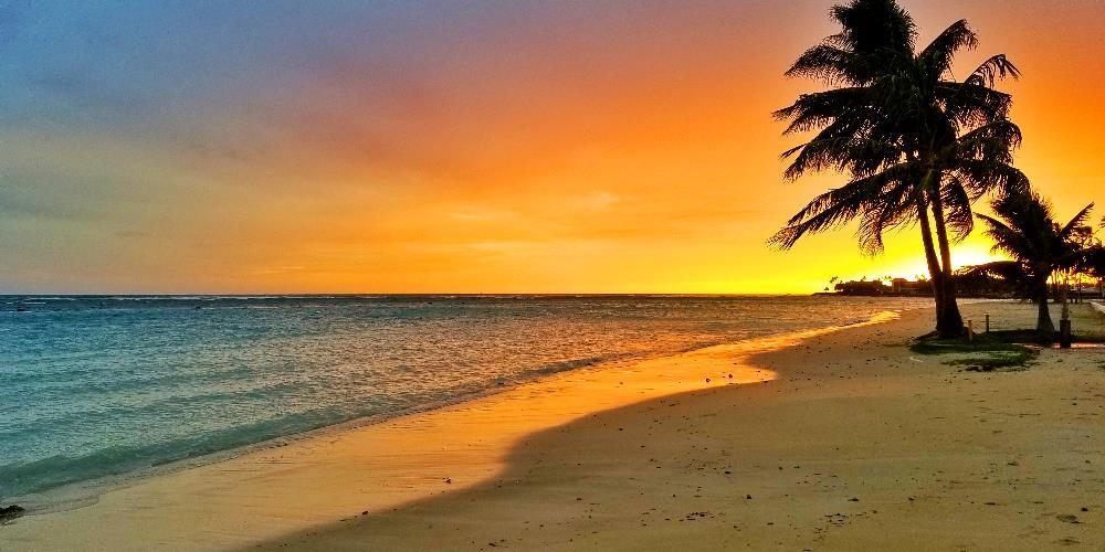 Beach w Palms
