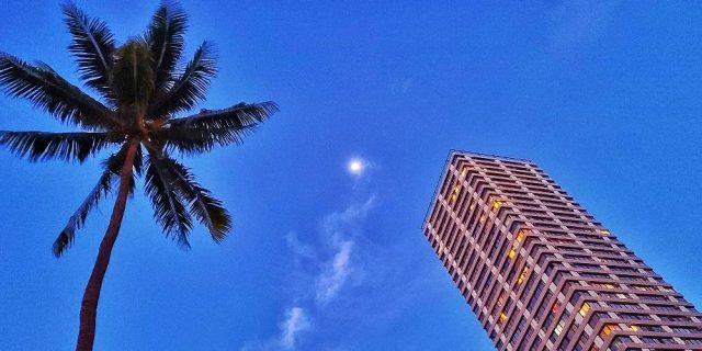 Palm tree - Moon - The Windsor